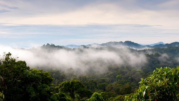 This image shows a Panama jungle vista.
