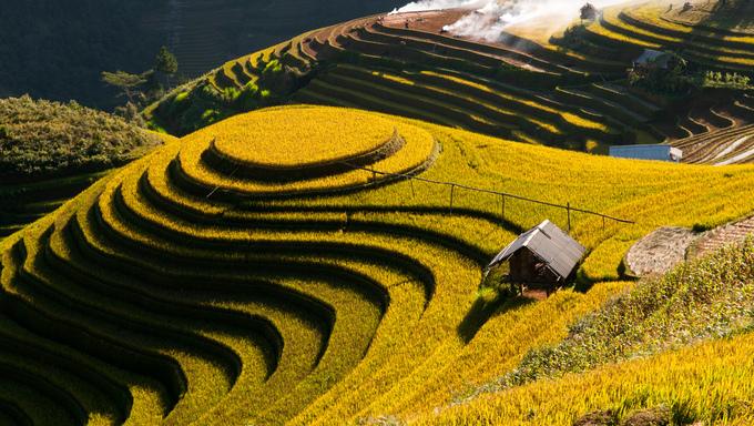Terraced rice field in rice season in Mu Cang Chai, Vietnam.