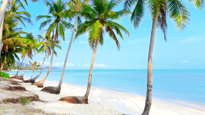 Tropical beach with coconut palm trees and white san