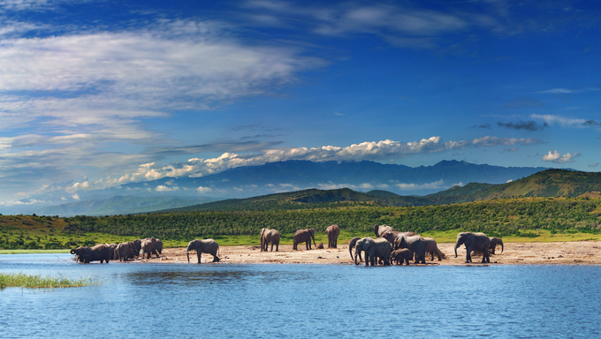 Herd of elephants in african savanna at watering.