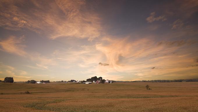 A cornfield in Iowa.