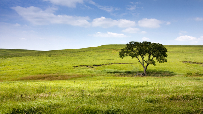 This serene and beautiful pasture landscape of the midwest tallgrass prairie with the undulating hills, lone tree, waves of blowing grass, deep blue sky and rich green colors makes for a marvelous view.
