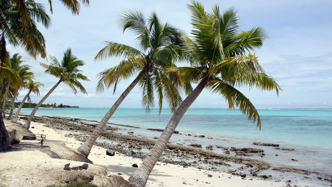 Palm trees and white sand on the sea shore in Savaii, Samoa