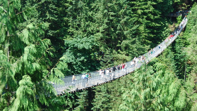 Capilano Bridge.