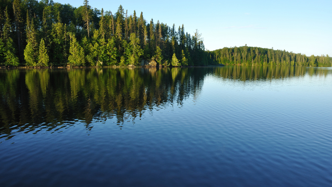 Reflections of the Coniferous Forest cast on a Wilderness Lake.