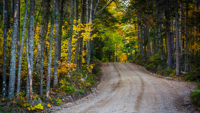 Autumn color along a dirt road in White Mountain National Forest, New Hampshire.