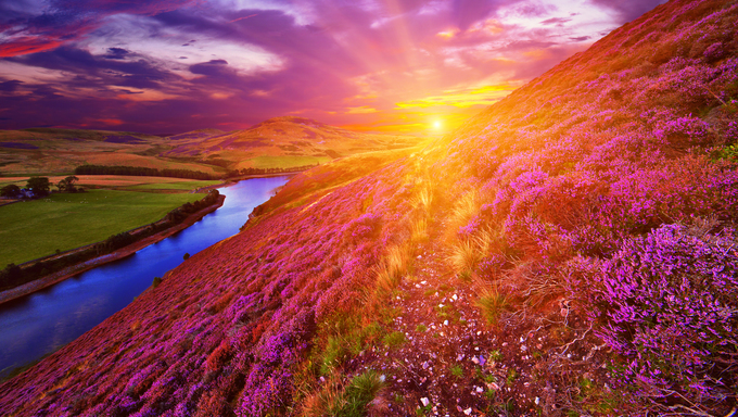 Vivid colorful landscape scenery with a footpath through the hill slope covered by violet heather flowers and green valley, river, mountains and cloudy blue sky on background. Pentland hills, near Edinburgh, Scotland
