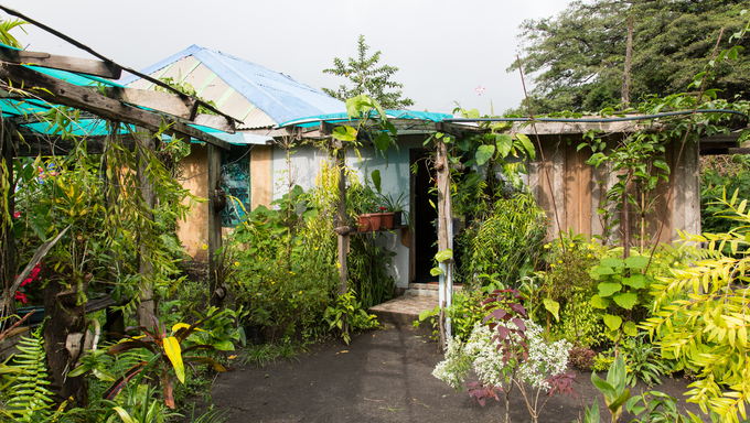 Jungle Bungalow