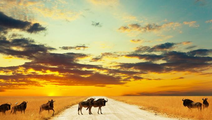 Antelope walking across a street at sunset.