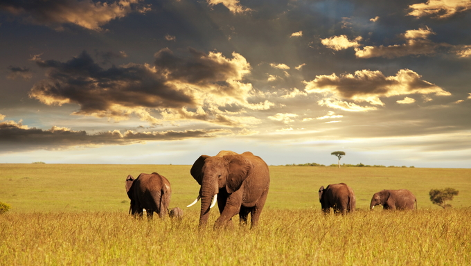 A parade of elephants at sunset.