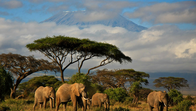 An elephant family walking in front of Mt. Kilimanjaro.