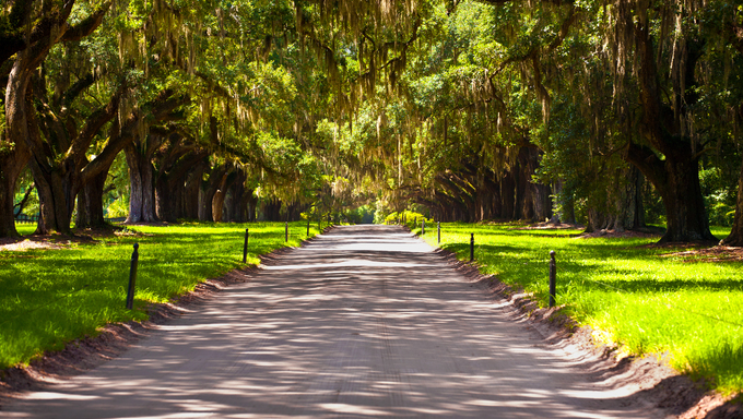 Beautiful oak alley in South Carolina.