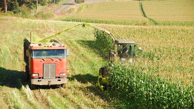 Feed corn silage being cut for a large dairy farm in the Willamette Valley near Salem Oregon.