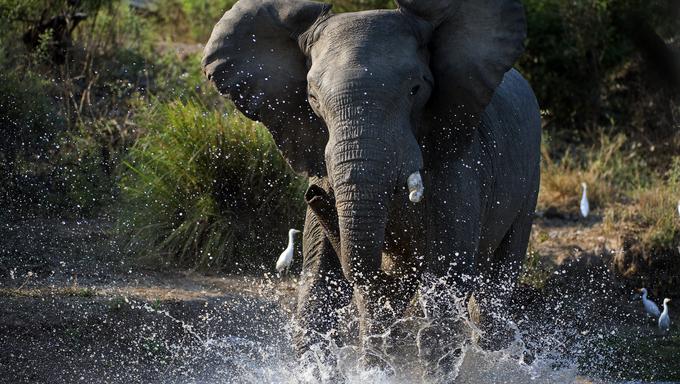 The river Zambezi. Zambia, Africa