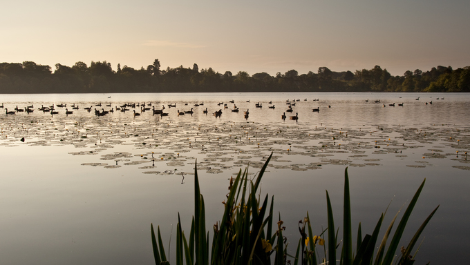 Ellesmere Lake at sunrise with ducks silhouetted in the early morning light.