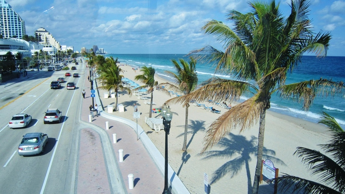 Palm trees at the Ft. Lauderdale beach in Florida.