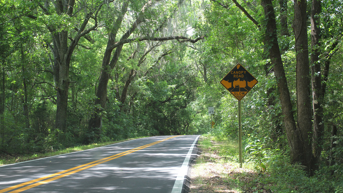 Old St. Augustine Road (Canopy Road).