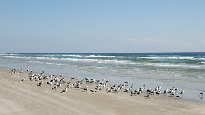 Seagulls on the beach of Padre Island.