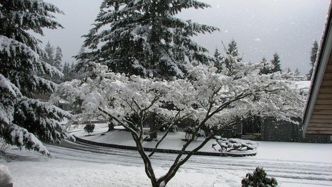 Snowfall in southern Everett, Washington.