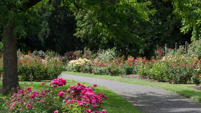 Classic view of the Owen Rose Garden in Eugene.