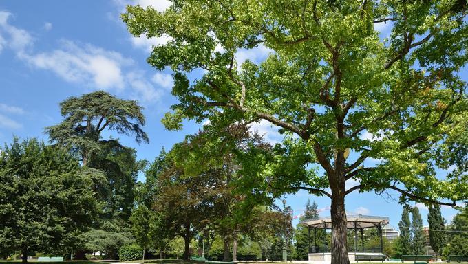 Park Beaumont is sunlit and empty.