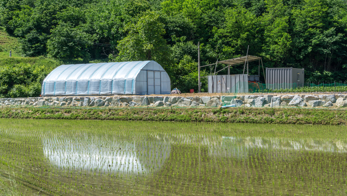 A small green house next to rice paddies. Taken in Gangneung during the Summer months.