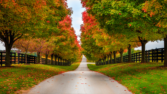 Road between horse farms in rural Kentucky