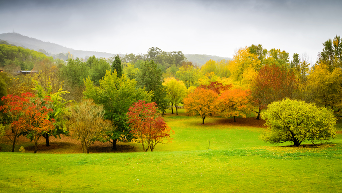 Autumn Landscape. Panorama of autumn trees in Australia