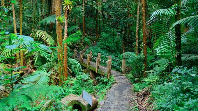 Tropical rain forest in San Juan, Puerto Rico.