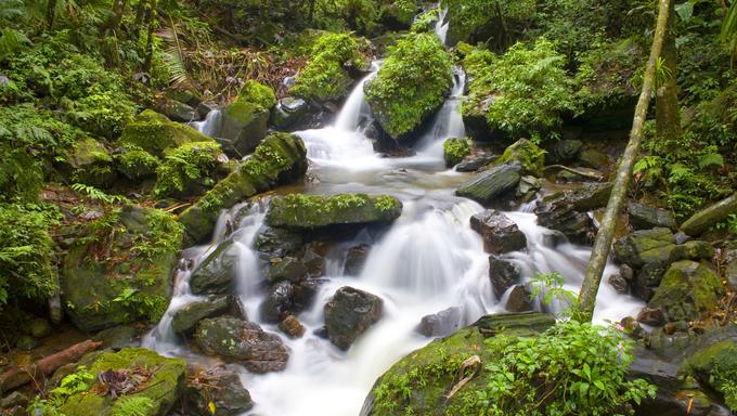 El Yunque river stream in Puerto Rico.