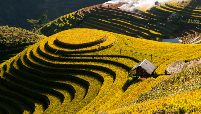 Terraced rice field in rice season in Mu Cang Chai, Vietnam.