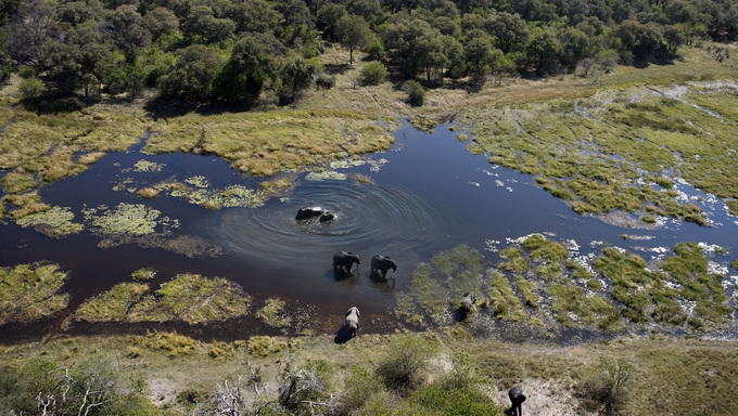 Aerial view of Elephants (Loxodonta africana) in the Okavango Delta in Botswana.