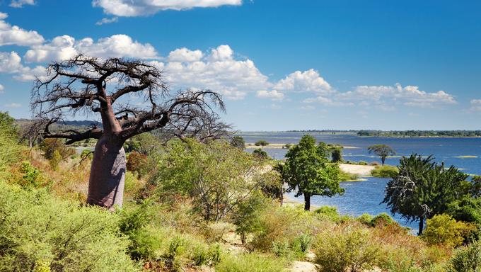 African landscape, Chobe river, Botswana.