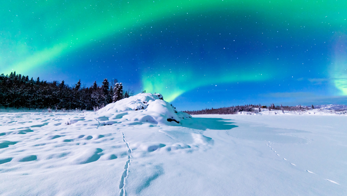 Spectacular display of intense Northern Lights or Aurora borealis forming green swirls over snowy winter landscape of Alaska.