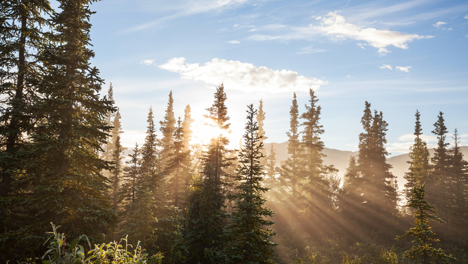 Sunny beams in the Alaskan forest.
