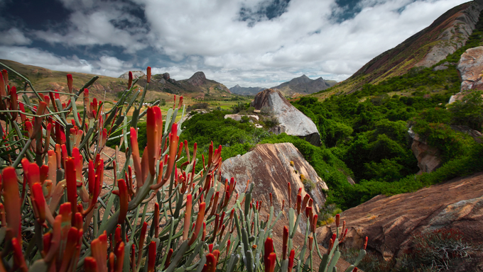 Red flowers and rocky Madagascar.