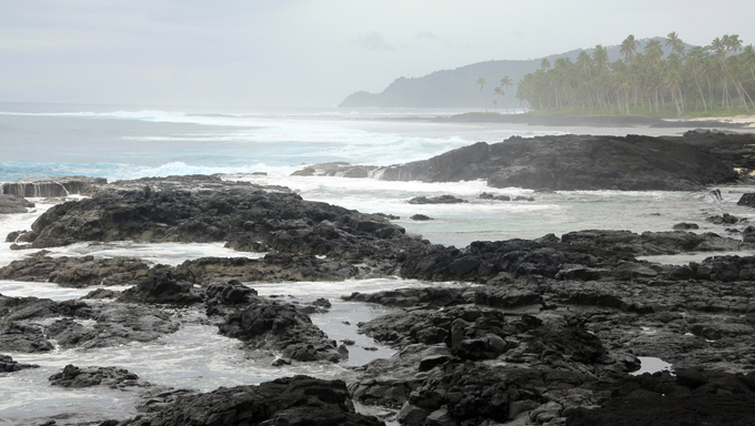 Black lava and palm trees on the coast in Samoa