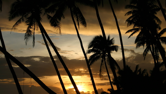 Beautiful tropical sunset through the coconut palms in Samoa - South Pacific