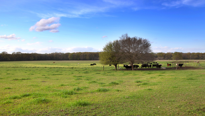 A view of some prime Mississippi farmland.