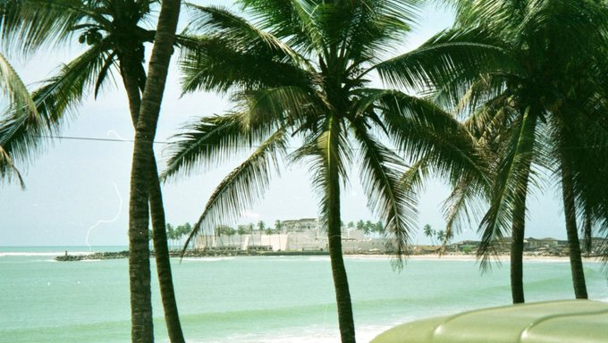 Beautiful palm trees overlooking the castle of Cape Coast.