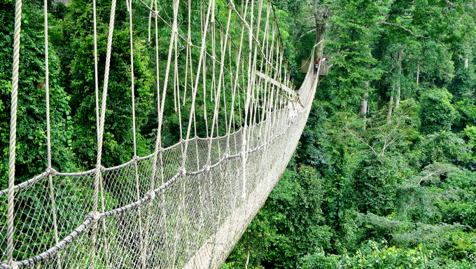 Rope walkway through the treetops in a rain forest in Ghana