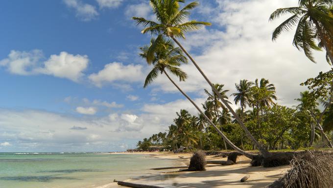 Wild Caribbean beach.