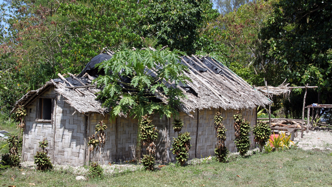 Hut and papaya tree near the forest in Efate island, Vanuatu