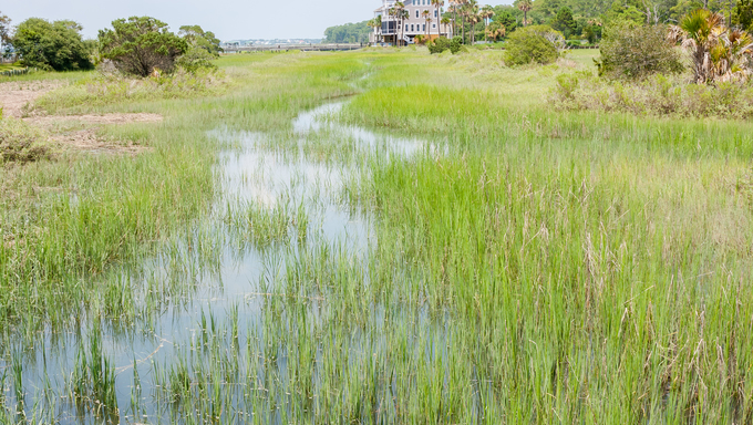 Wetlands at the beach of South Carolina.