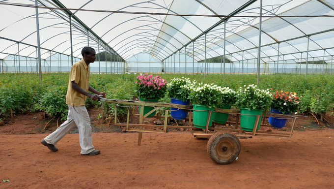 A Zambian farmer in his normal routine.
