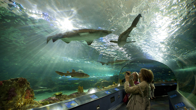 The shark tank at Ripley's Aquarium, located at the foot of the CN tower.