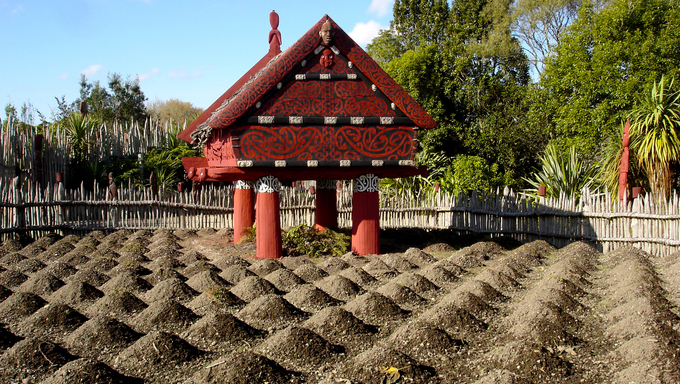 Te Parapara Maori garden in Hamilton Gardens, New Zealand. It's New Zealand's only traditional Maori productive garden which showcases traditional Maori cultivation knowledge.