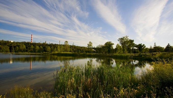 Marshland in Edmonton.
