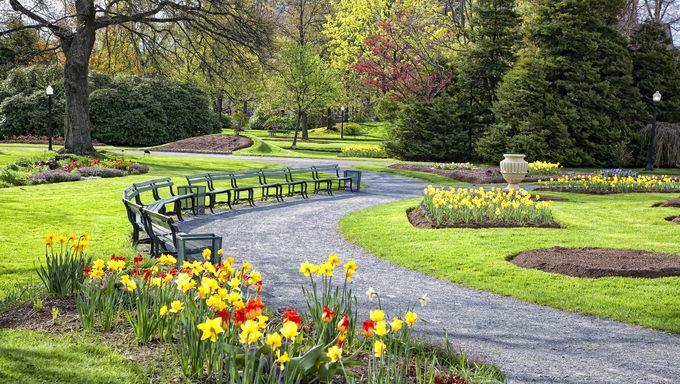 A view of a large public garden in the center of Halifax. It's filled with beds of Daffodils and Tulips.