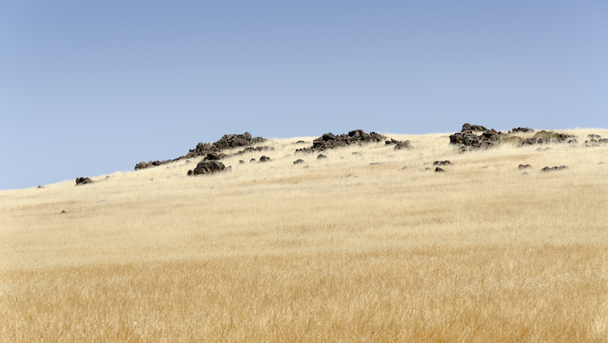 A field of dry grass just out of Fresno.